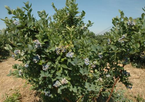 Rancho Azul