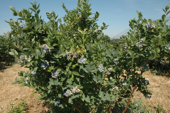 Rancho Azul picture