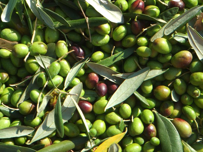 California Gold Olive Co