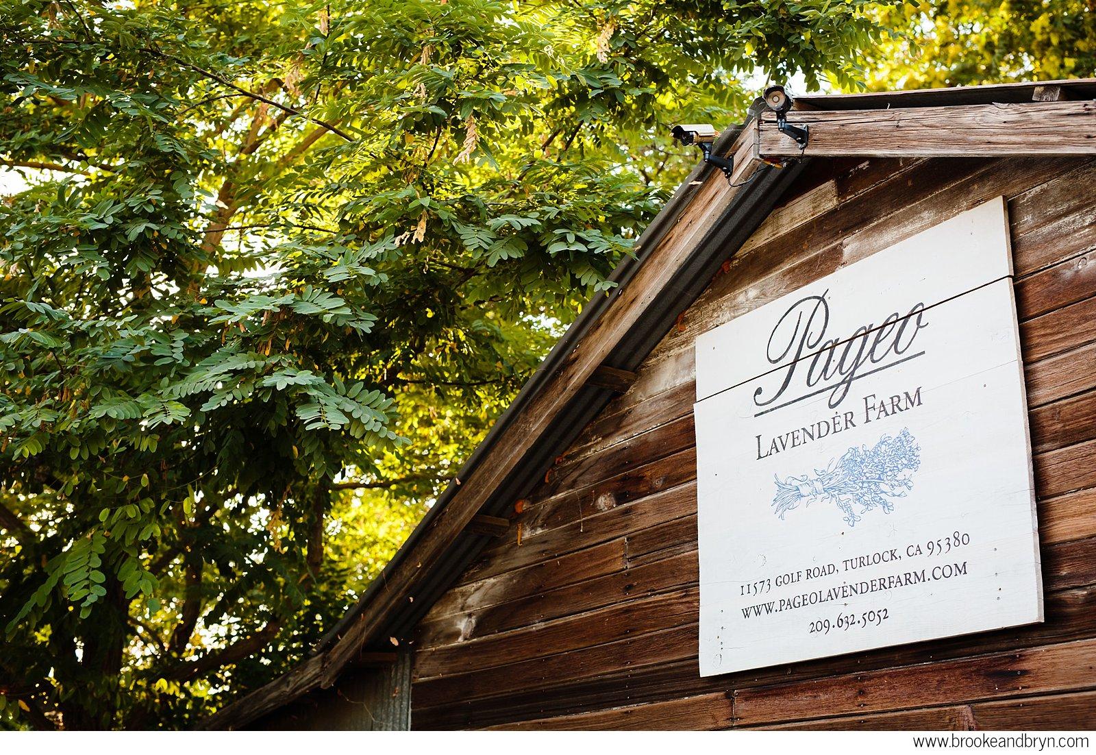 pageo-lavender-farm-wedding-046